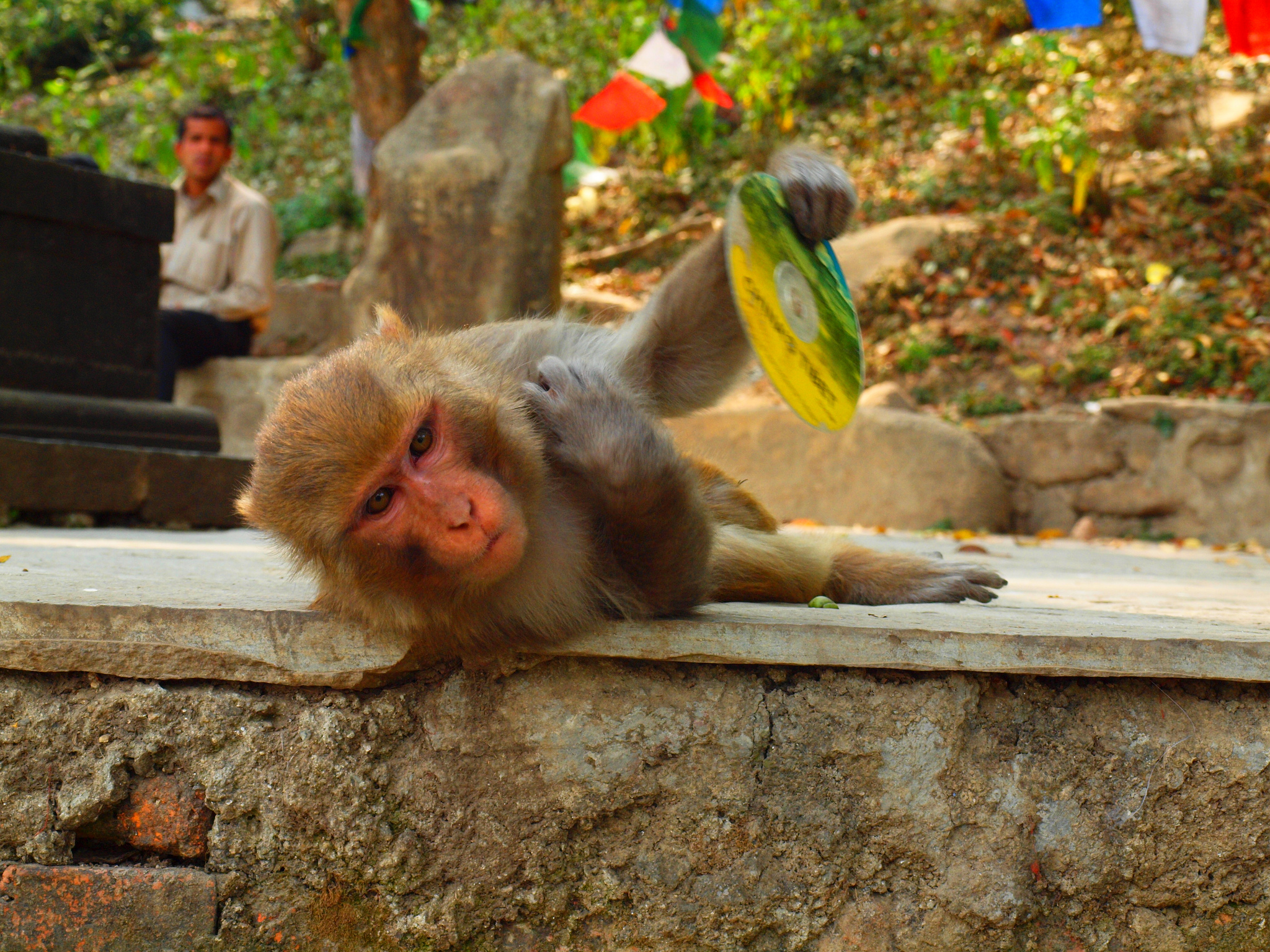 Gaze over Monkeys at Swoyambhunath Stupa & Narayanhiti Palace Museum